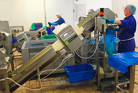 Processing fresh veg for the retail and catering sectors demands the highest level of hygiene and safety.